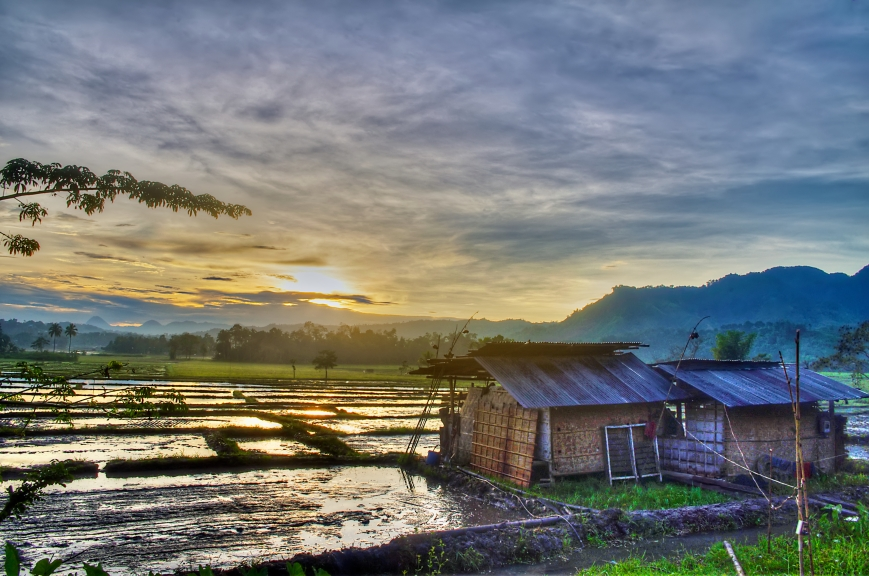 Break of Dawn Across the Rice Paddies